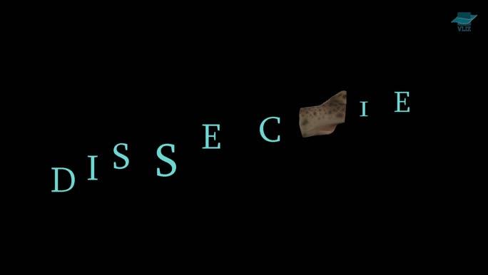 VIDEO: Dissectie hondshaai