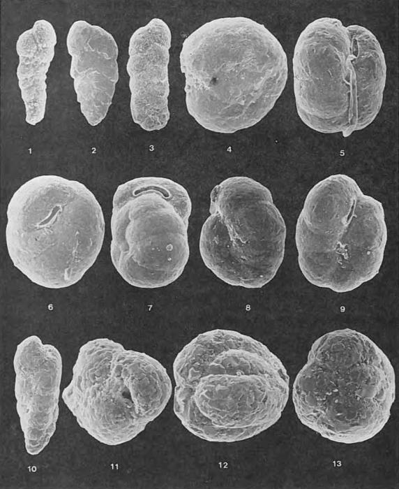 Foraminifera - Plate 3 - Lituolidae, Textulariidae, Ataxophragmiidae