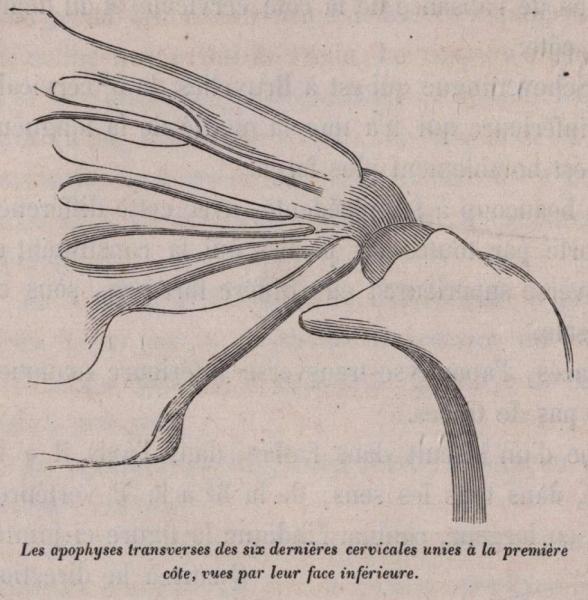 Van Beneden (1870, fig. 08)
