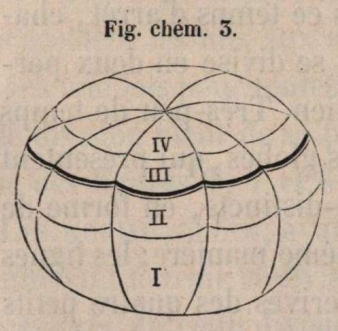 Van Beneden & Bessels (1868, fig. chém. 3)