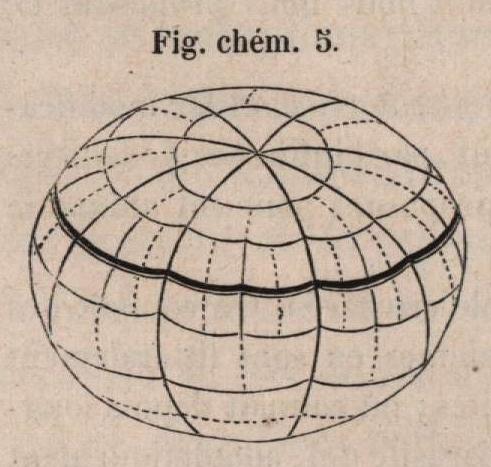 Van Beneden & Bessels (1868, fig. chém. 5)