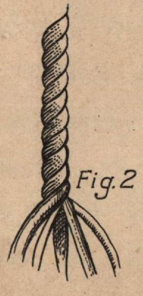 De Jonghe (1912, fig. 02)