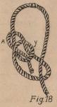 De Jonghe (1912, fig. 18)