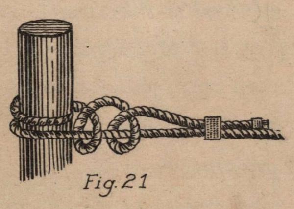 De Jonghe (1912, fig. 21)