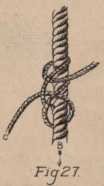 De Jonghe (1912, fig. 27)