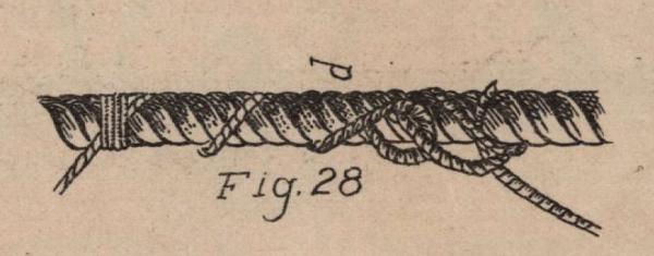 De Jonghe (1912, fig. 28)
