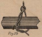 De Jonghe (1912, fig. 29)
