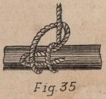 De Jonghe (1912, fig. 35)