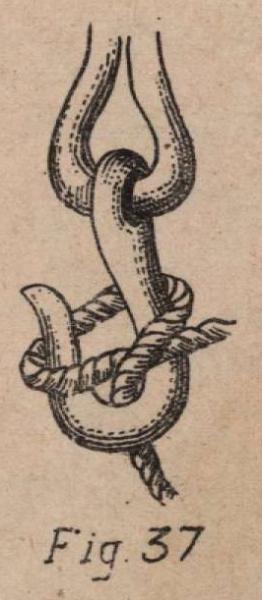 De Jonghe (1912, fig. 37)