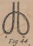De Jonghe (1912, fig. 44)