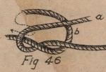 De Jonghe (1912, fig. 46)