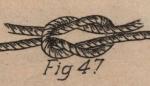 De Jonghe (1912, fig. 47)