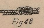 De Jonghe (1912, fig. 48)