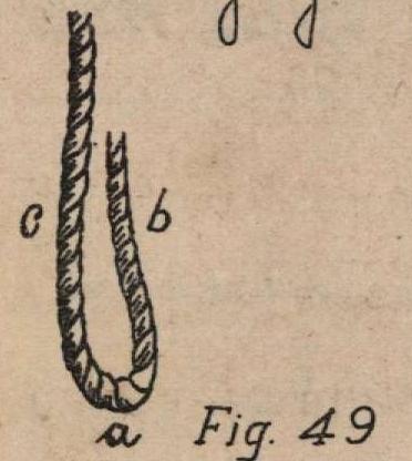 De Jonghe (1912, fig. 49)