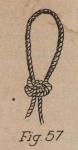 De Jonghe (1912, fig. 57)