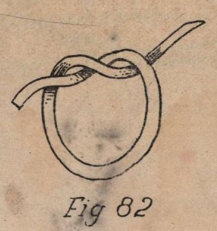 De Jonghe (1912, fig. 82)