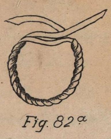 De Jonghe (1912, fig. 82a)