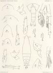 &lt;B&gt;Giesbrecht, W.&lt;/B&gt; (1902). Zoologie: Copepoden. <i>Résultats du Voyage du S.Y. <i>Belgica</i> en 1897-1898-1899 sous le commandement de A. de Gerlache de Gomery: Rapports Scientifiques (1901-1913)</i>, 8(5). Buschmann: Anvers, Belgium. 49, XIII plates