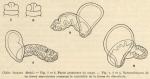 &lt;B&gt;Cernosvitov, L.&lt;/B&gt; (1935). Zoologie: Oligochètes. <i>Résultats du Voyage de la <i>Belgica</i> en 1897-1899 sous le commandement de A. de Gerlache de Gomery: Rapports Scientifiques (1926-1940)</i>. Buschmann: Anvers, Belgium. 11 pp.