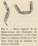 De Wildeman, E. (1935). Botanique: Observations sur des algues rapportées par l'Expédition antarctique de la Belgica. Résultats du Voyage de la Belgica en 1897-1899 sous le commandement de A. de Gerlache de Gomery: Rapports Scienti