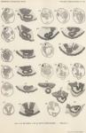 Van Beneden, de Selys Longchamps (1940, pl. 08)