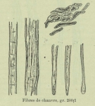 Huwart (1905, fig. B)