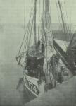 Gilson (1911, fig. 04)
