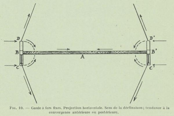 Gilson (1911, fig. 10)