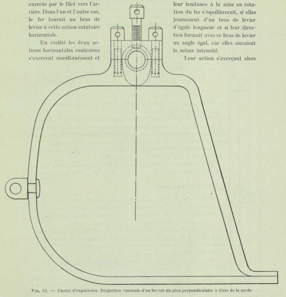 Gilson (1911, fig. 13)