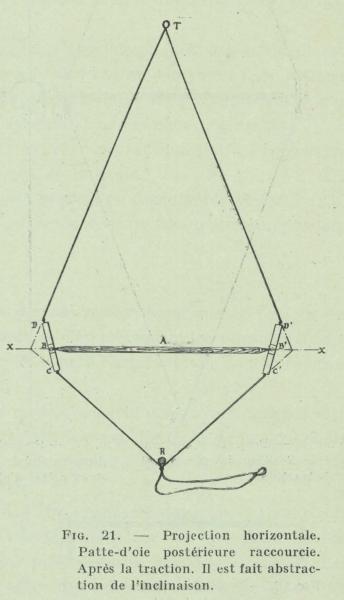 Gilson (1911, fig. 21)