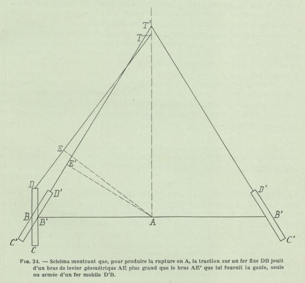Gilson (1911, fig. 24)