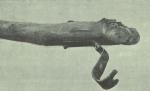 Gilson (1911, fig. 26)