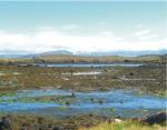 A typical intertidal zone near Stykkisholmur, Breidafjordur, West Iceland.