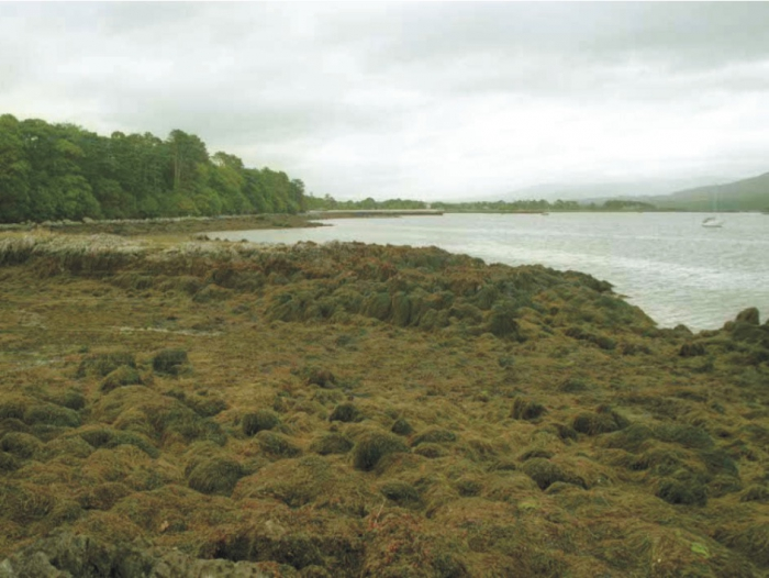 Inner Kenmare River is sheltered with fucoid covered rocky shores.