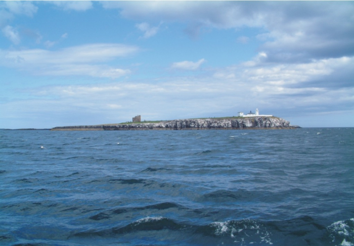 Inner Farne, the largest island of the Farnes group.