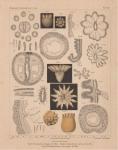 Van Beneden, E. (1897). Les Anthozoaires de la Plankton-Expedition = Die Anthozoen der Plankton-Expedition. Ergebnisse der in dem Atlantischen Ocean von Mitte Juli bis Anfang November 1889 ausgeführten Plankton-Expedition de