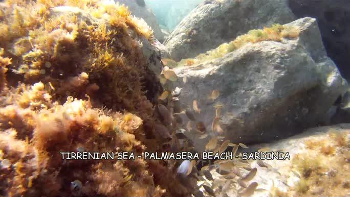 Italy Sardinia - Dorgali - Aquarium Cala Gonone