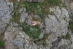 Kestrel (Falco tinnunculus), author: Lowry, Roy