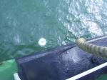 zichtbaarheid zeewater bepalen: secchi schijf