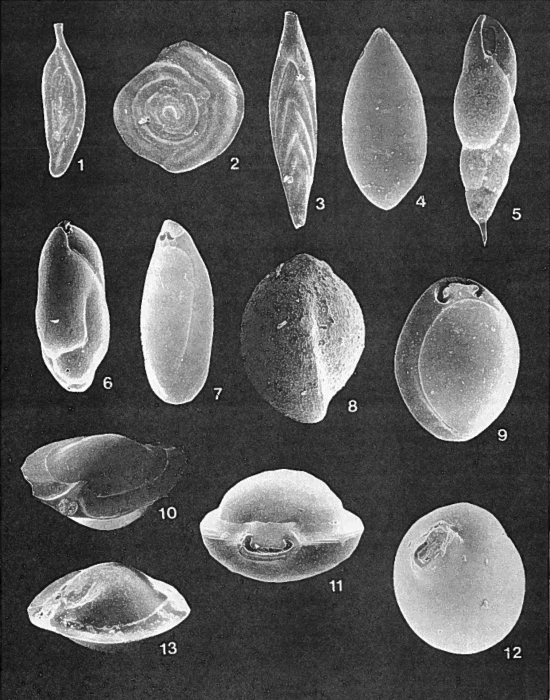 Forams -Plate 9- (Newfoundland)