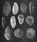 Forams -Plate 10- (Newfoundland)