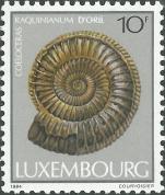 Coeloceras raquinianum