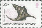 Perissoptera sp.