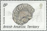 Sanmartinoceras sp.