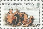 Umbilicaria antarctica