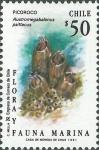Austromegabalanus psittacus