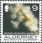 Actinothoe sphyrodeta