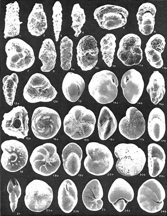 Foraminifera and Mollusca - Lake Melville