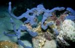 Porifera, Class Demospongiae