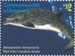 Mesoplodon densirostris